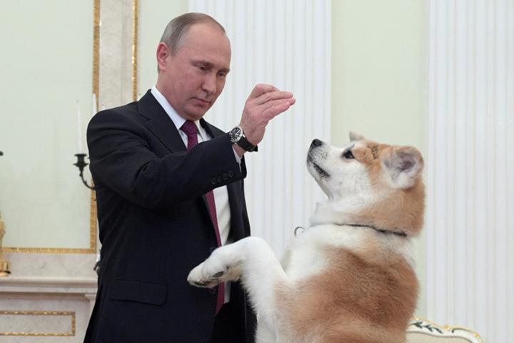 Самая невежливая из собак - Цензор.НЕТ 7730