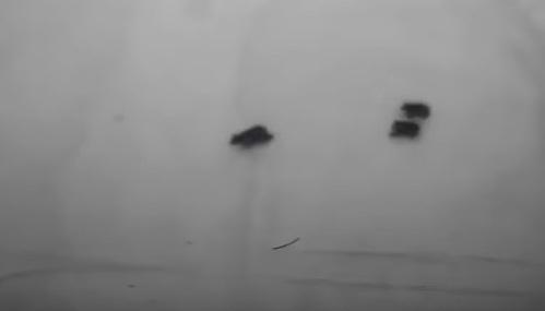 Туристы сняли навидео медведицу спотомством налыжной трассе вСочи