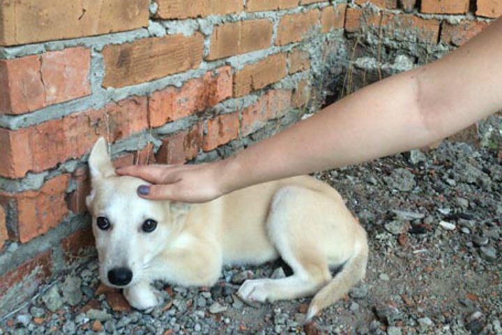 ВХабаровске завели дело понедострою, где живодерки убивали собак