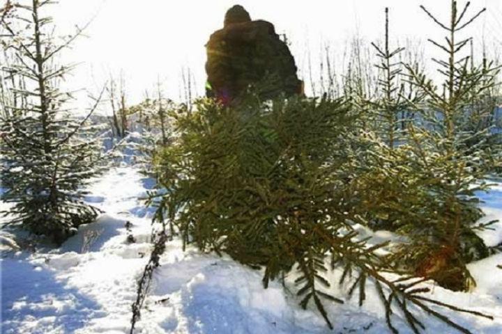 ВПушкине словили петербуржца, срубившего 3-метровую елку впарке