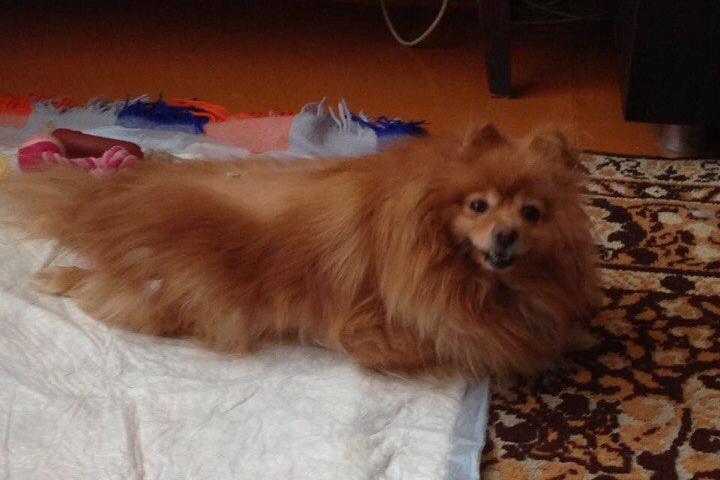 ВКрасноярске шофёр такси похитил упассажира больную собаку