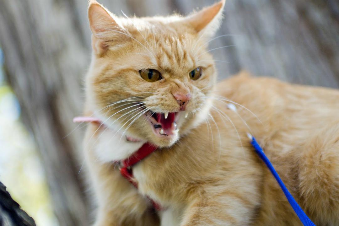 В этом году вКировской области зафиксировали два случая бешенства животных