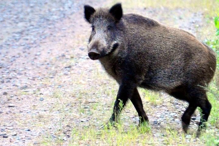 ВВолгограде браконьер заплатит 85 тыс. штрафа закабана