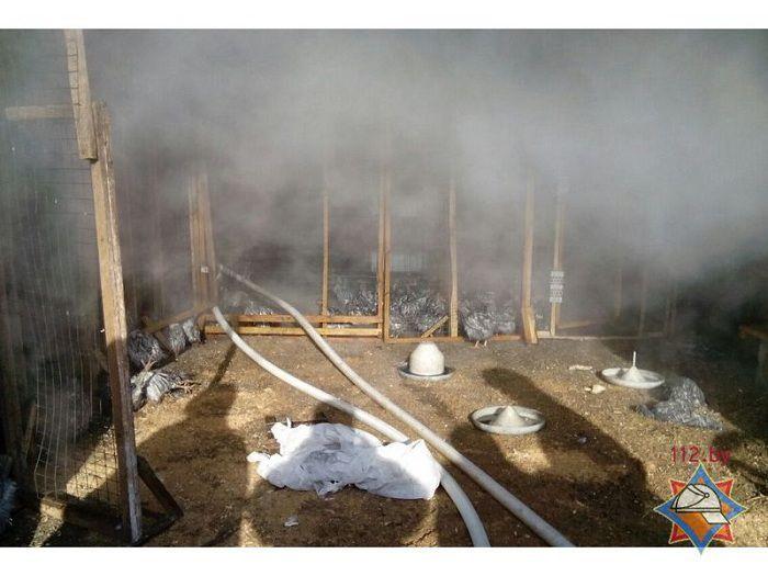 ВДзержинском районе наптицефабрике погибли 700 кур