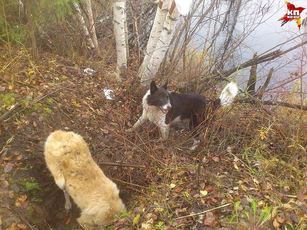 ВСвердловской области отукусов собак пострадали 9 тыс.  человек