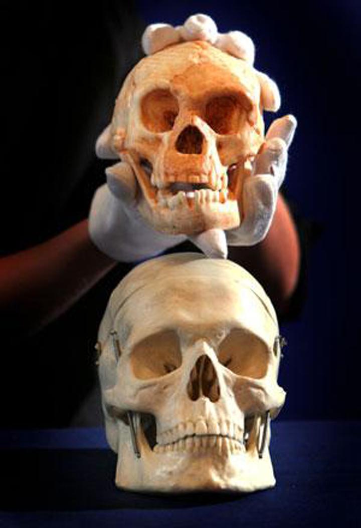 Череп человека и череп хоббита - ощутите разницу.