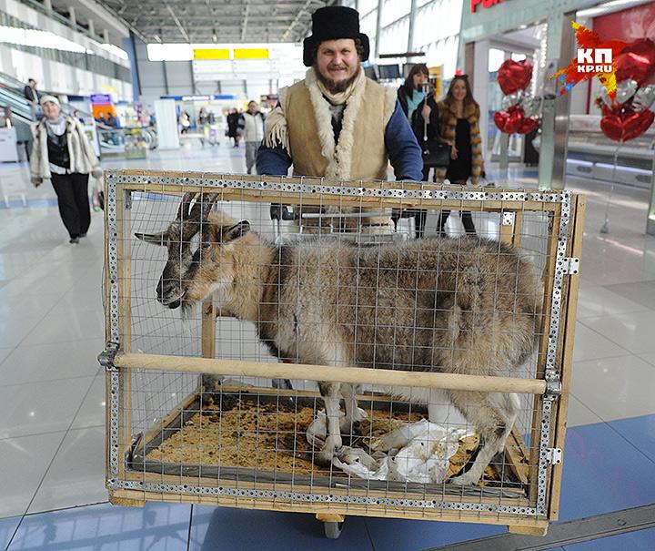 На перевозной клетке Меркель по прилету нашли следы взлома - к счастью, изнутри Фото: Владимир ВЕЛЕНГУРИН