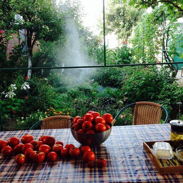 Алена Свиридова выращивает на своем огороде в Крыму завидные помидоры...
