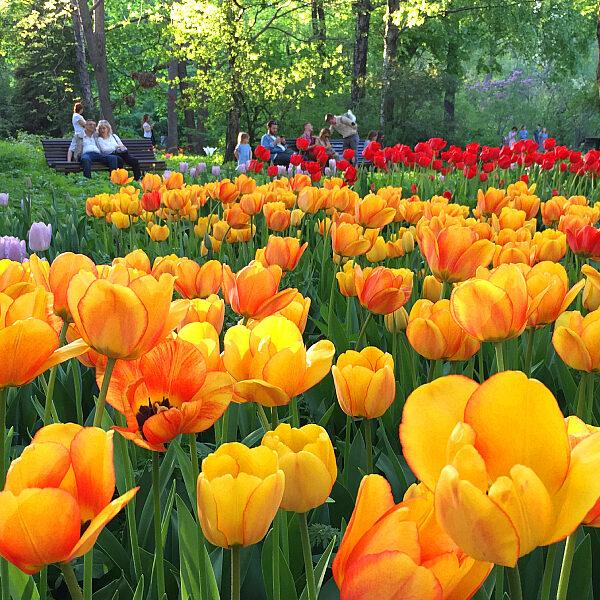 Фестиваль цветов в Аптекарском огороде