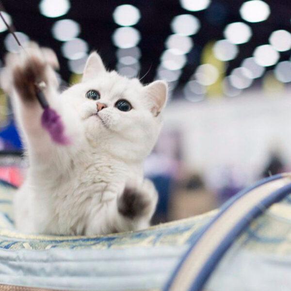 Выставка «Мир кошек» в Экспофоруме