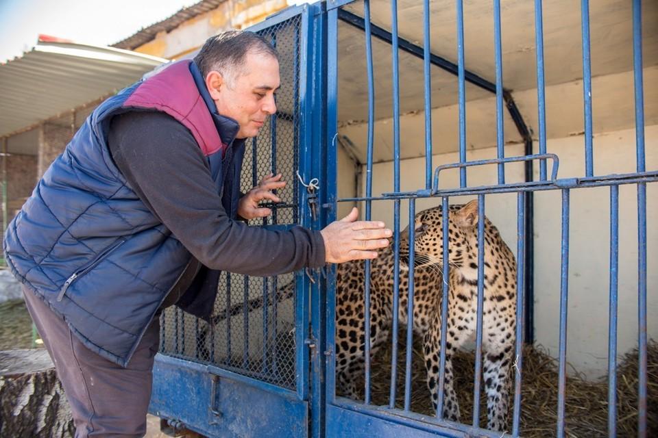 Карен и леопард Агат - бывший артист цирка (дрессировщик держал его на голодном пайке, чтобы хищник лучше работал в манеже).