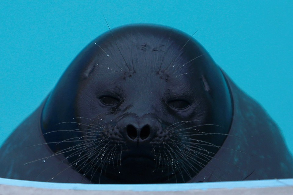 Крошик. Фото: Центр реабилитации морских млекопитающих