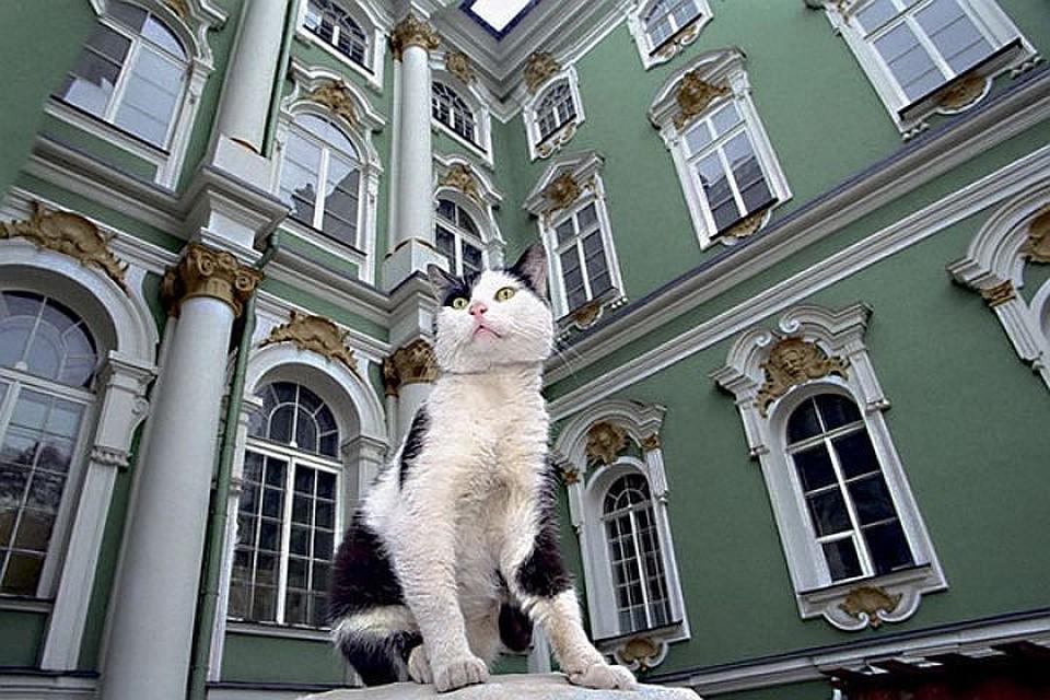 эрмитажный кот фото может