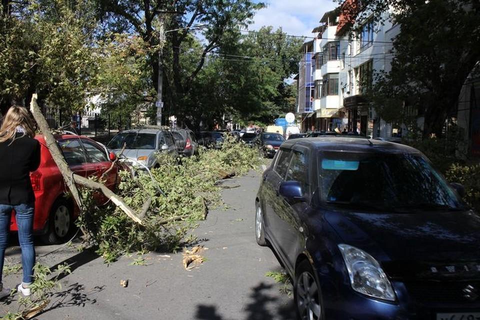В столице ветер ломал ветки и рвал провода.