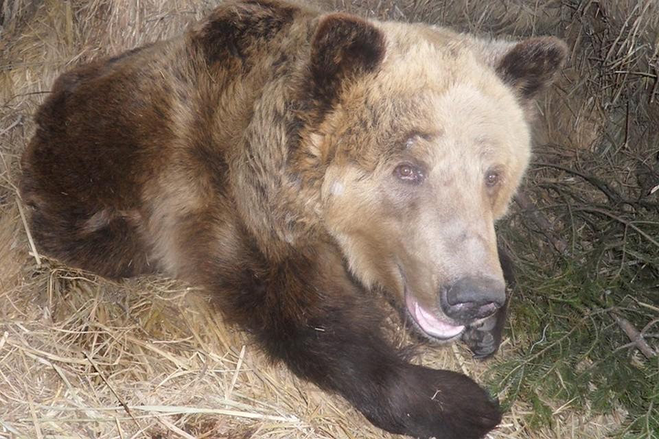 Даклат про медведя по немецкому языку 3 класс