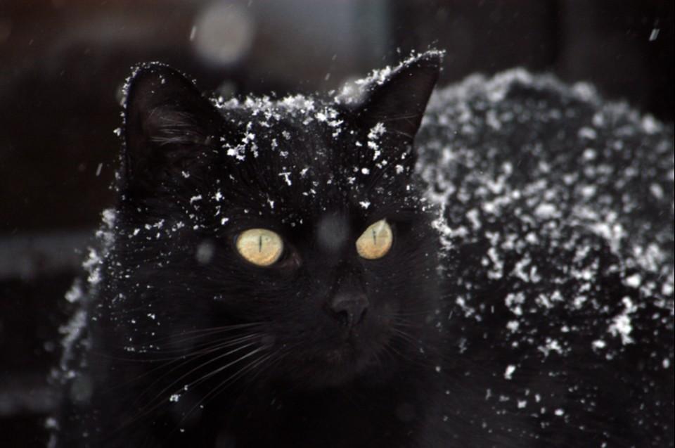 Любителей кошек в Петербурге в два раза больше, чем владельцев собак