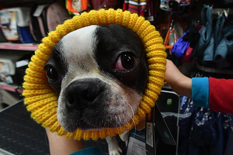 df2b1c4facb7 Зимняя одежда для собак в Москве  покупаем комбинезоны, костюмы, шубки