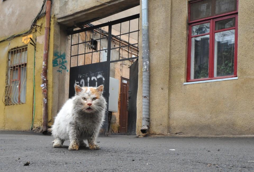 Множество беспризорных кошек оказываются замурованными в подвалах жилых домов