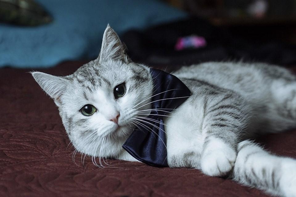 Фотографии самого милого косоглазого кота в Интернете | Милые ... | 640x960