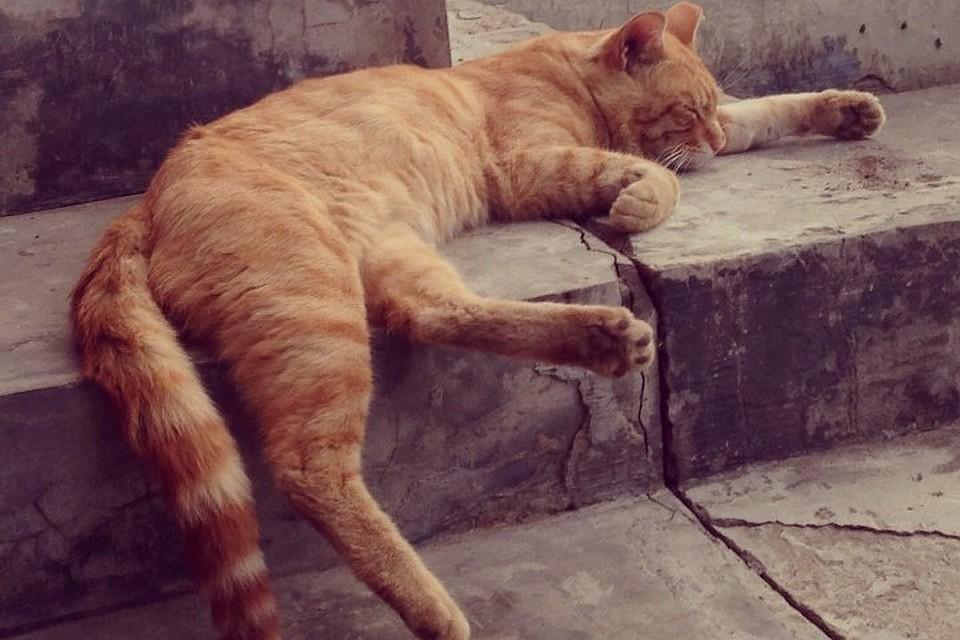 Домашнего кота, гулявшего во дворе, жестоко убили в Ангарске