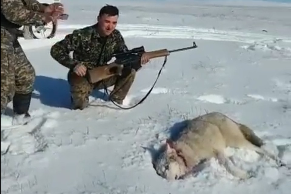 В результате животное погибло, а охотник даже не пострадал
