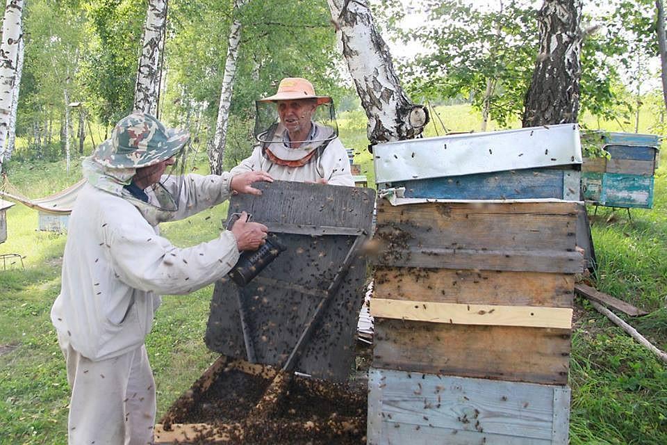 пчеловоды амурской области фото клубе периодически показываются