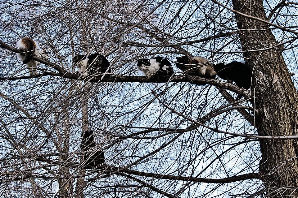картинки коты прилетели такого нойз