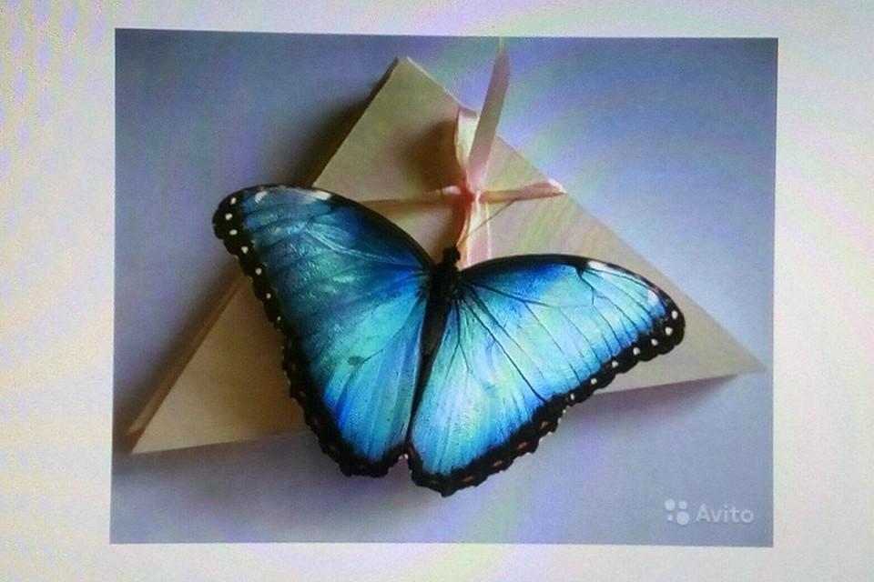 6218b01f9b7d Живых бабочек продают в Барнауле