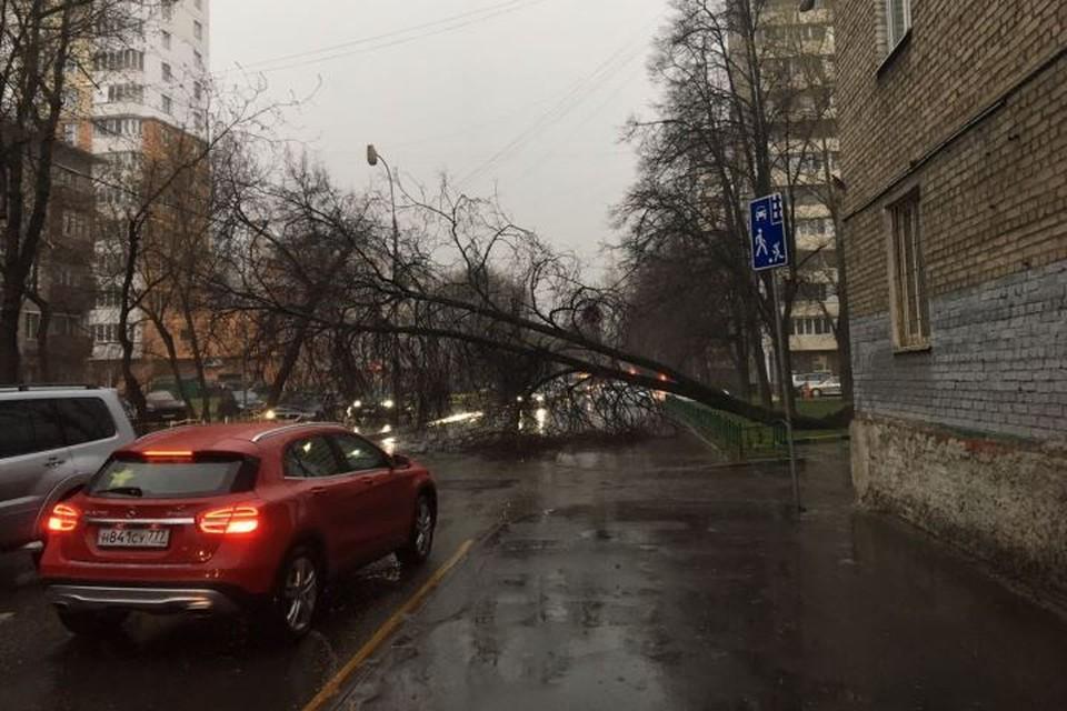 В субботу, 21 апреля, столичный регион накрыл штормовой ветер и ливни, в итоге были повалены сотни деревьев