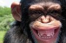Шокирующие итоги исследования: у людей постель грязнее, чем у обезьян!
