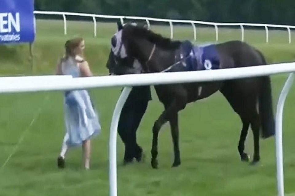 Журналистка Хейли Мур остановила коня на скаку в прямом эфире