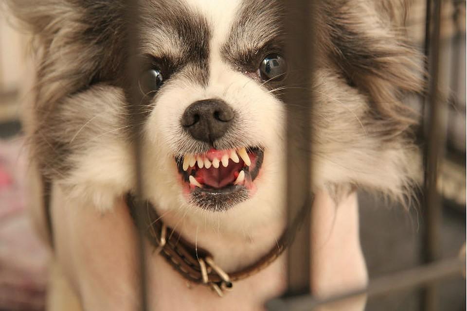 Диплазацыятазобедерного сустава лечится или это приговор у собак фиксация лучезапястного сустава при занятиях спортом