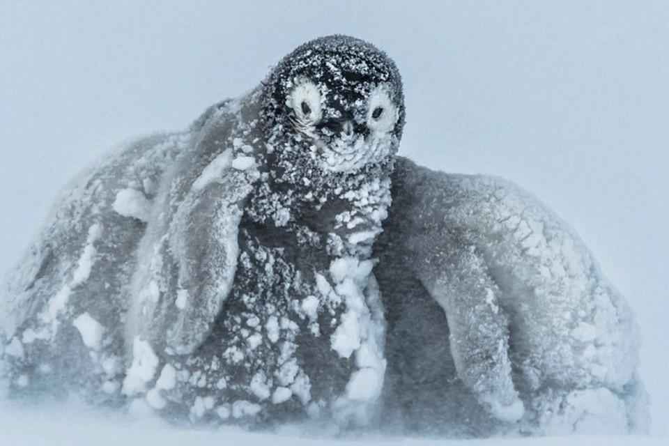 """Не везде на Земле """"глобальное потепление"""", о котором твердят метеорологи, оставляет приятные ощущения."""
