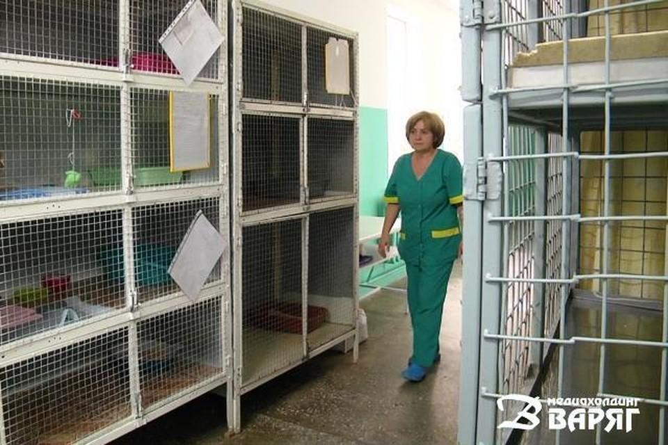За 3-5 рублей в сутки в стационар при ветлечебнице можно было отдать животное на передержку. Фото: varjag.net