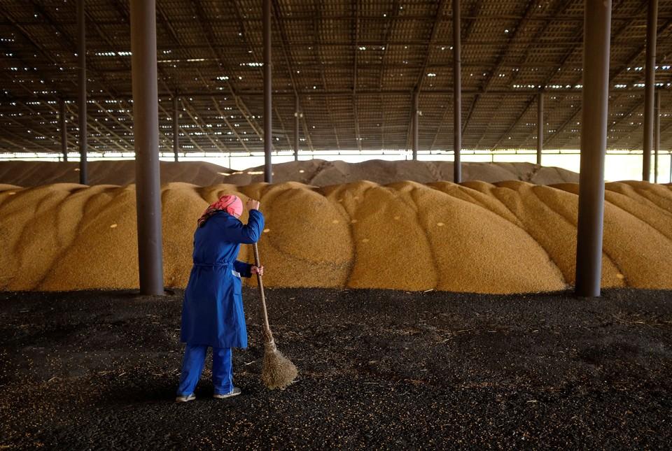Правительство РФ распродаст 1,5 млн тонн зерна из Госфонда