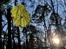Последний портрет осеннего листочка в солнечных тонах