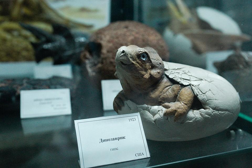 Volgatitan simbirskiensis: Петербургские ученые определили нового динозавра по семи позвонкам
