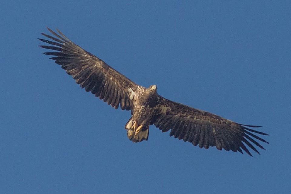 Свободные сексуальные отношения орел
