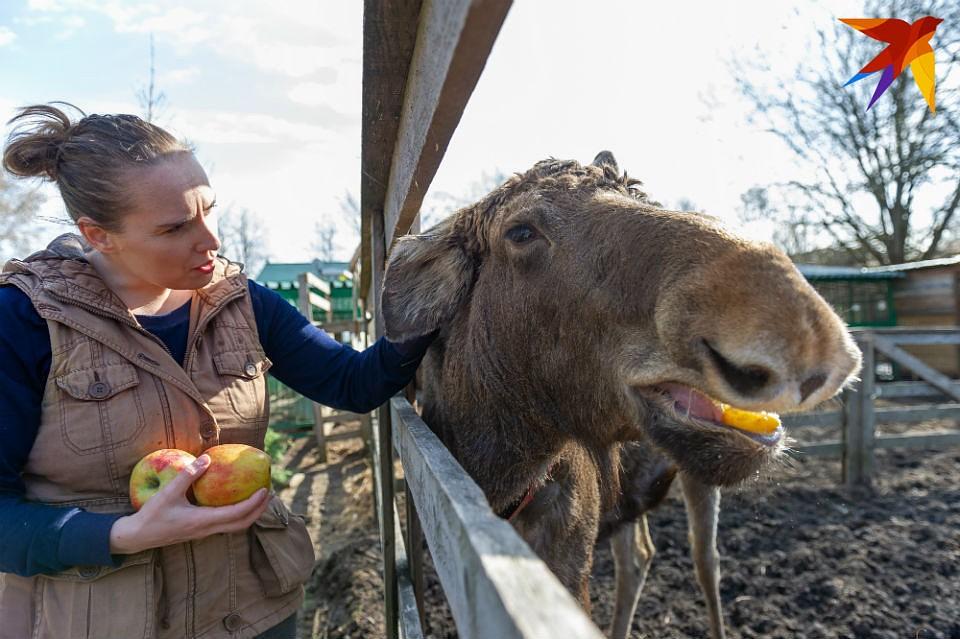 9e323ffa0ddd Где рожать лосям  Жители Ловозерского района переживают, что Минприроды  создало у них под боком охотничье угодье