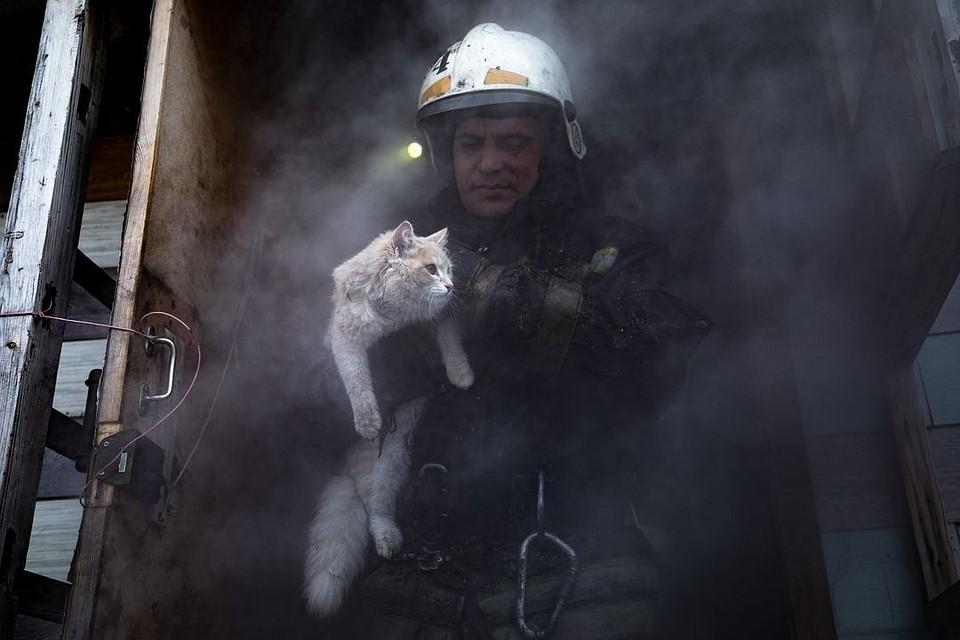 Картинка с двумя котами вынесенными из пожара, открытки днем медика