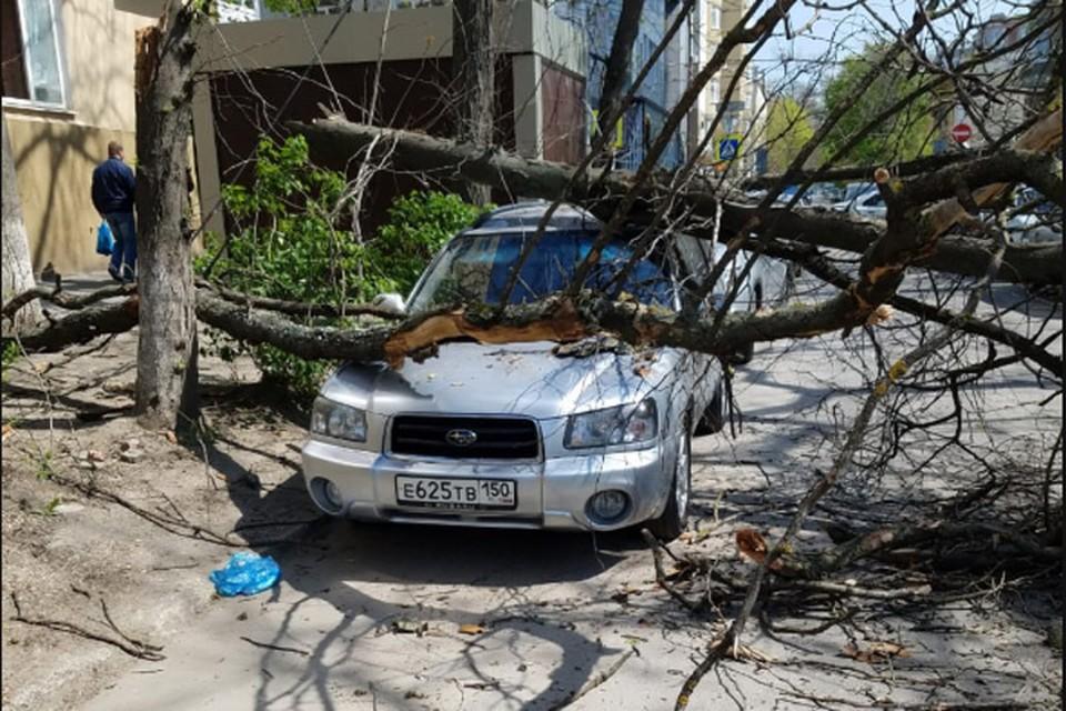 "Акация рухнула на припаркованный ""Субару"""