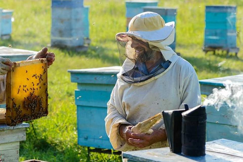 уважаемые пчеловоды картинки года