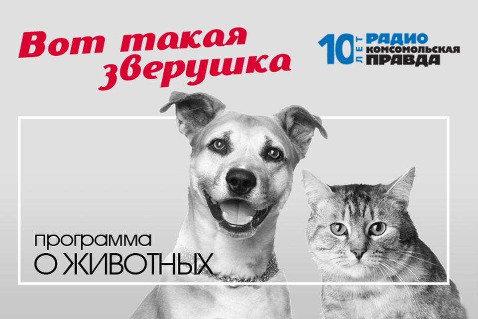 Президент Российской кинологической федерации Владимир Голубев отвечает на вопросы слушателей