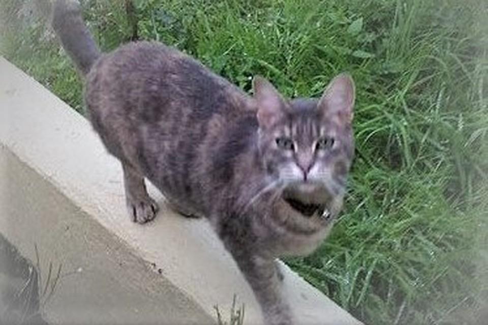 Кошка Хэтти