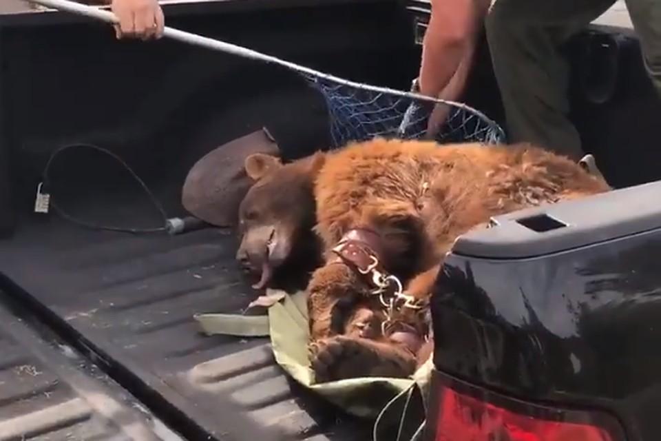 Мужчина набросился на медведицу, пытаясь защитить своего пса