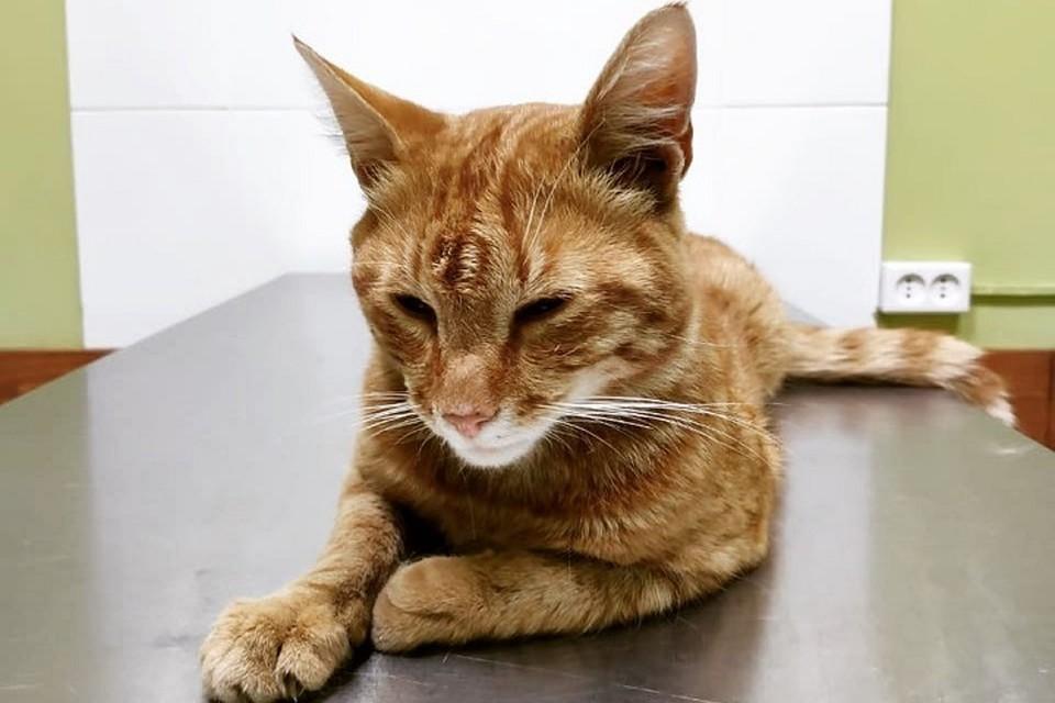 Лахтинский кот-строитель заболел и ищет донора