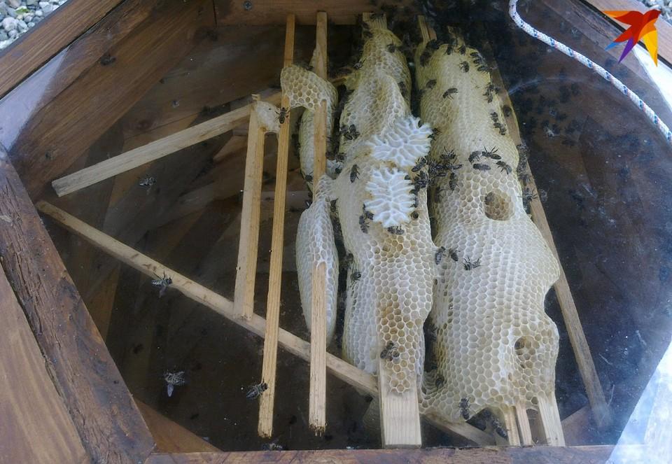 В Орловской области участились случаи гибели пчел