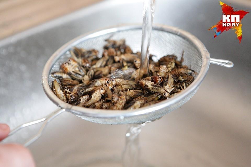 Итальянские ученые пришли к выводу, что насекомые полезнее мяса