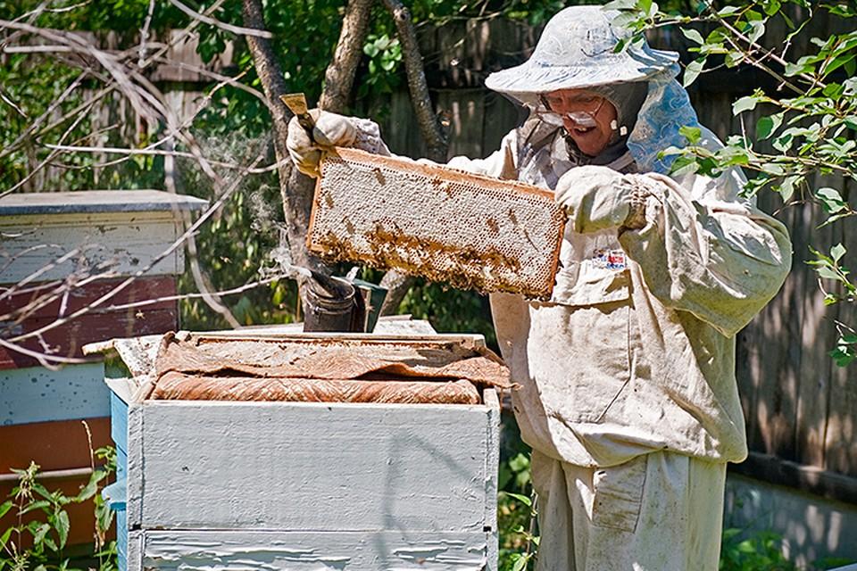 Есть подозрение, что гибель пчел, зафиксированная с начала лета уже во многих регионах, связана с бесконтрольным использованием контрафактных пестицидов