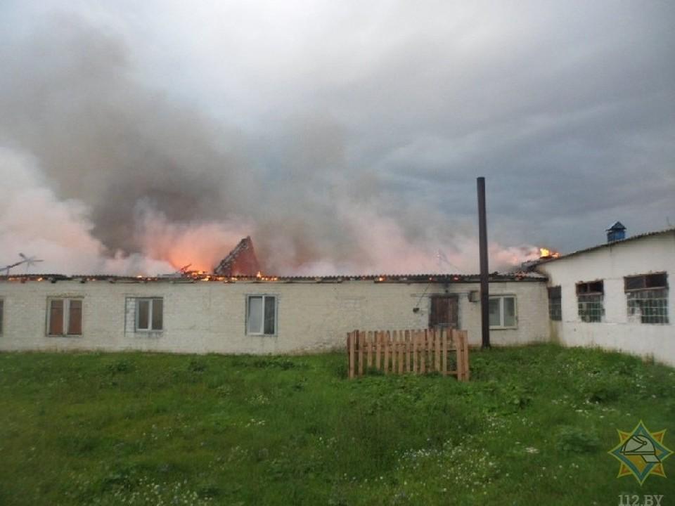 В Жлобинском районе чуть не погибли 400 коров. Фото: 112.by.